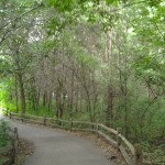 Springbrook Nature